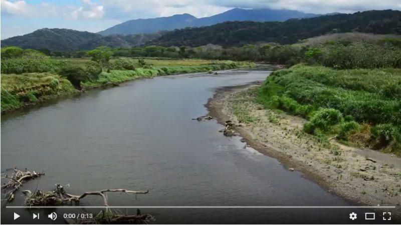 Prise de vue des crocodiles au Costa Rica